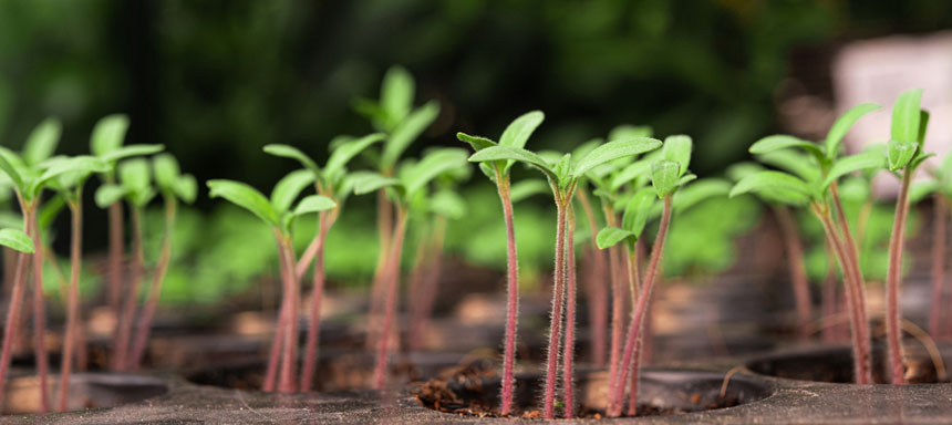 Thousands of seedlings will turn green in Syria with the Support of Hishtil-Toros Fidecilik